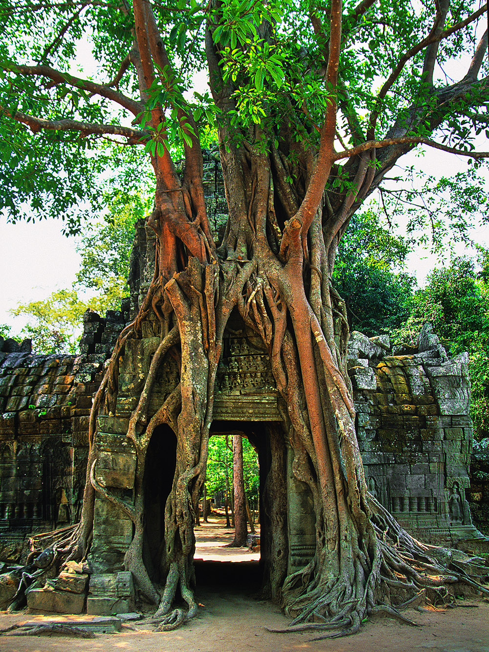 cambodia/angkor_door_tree_on_top