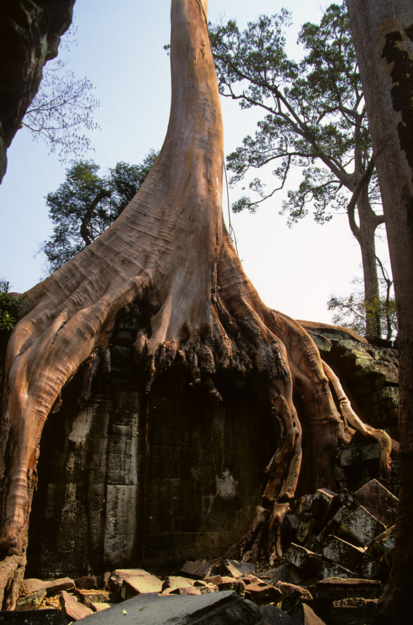 cambodia/angkor_gnarly_tree_roots