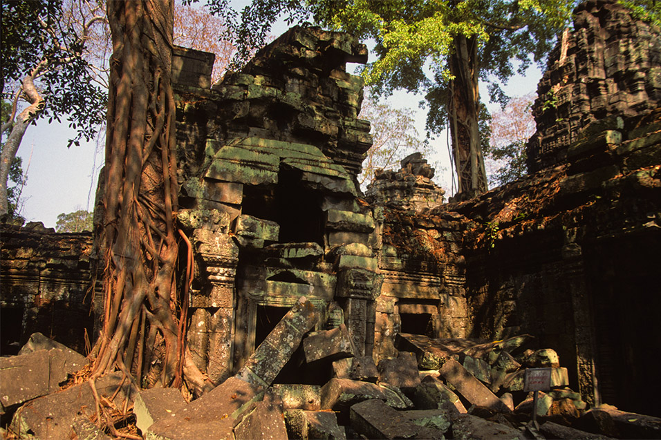 cambodia/angkor_roots_bricks_leaves