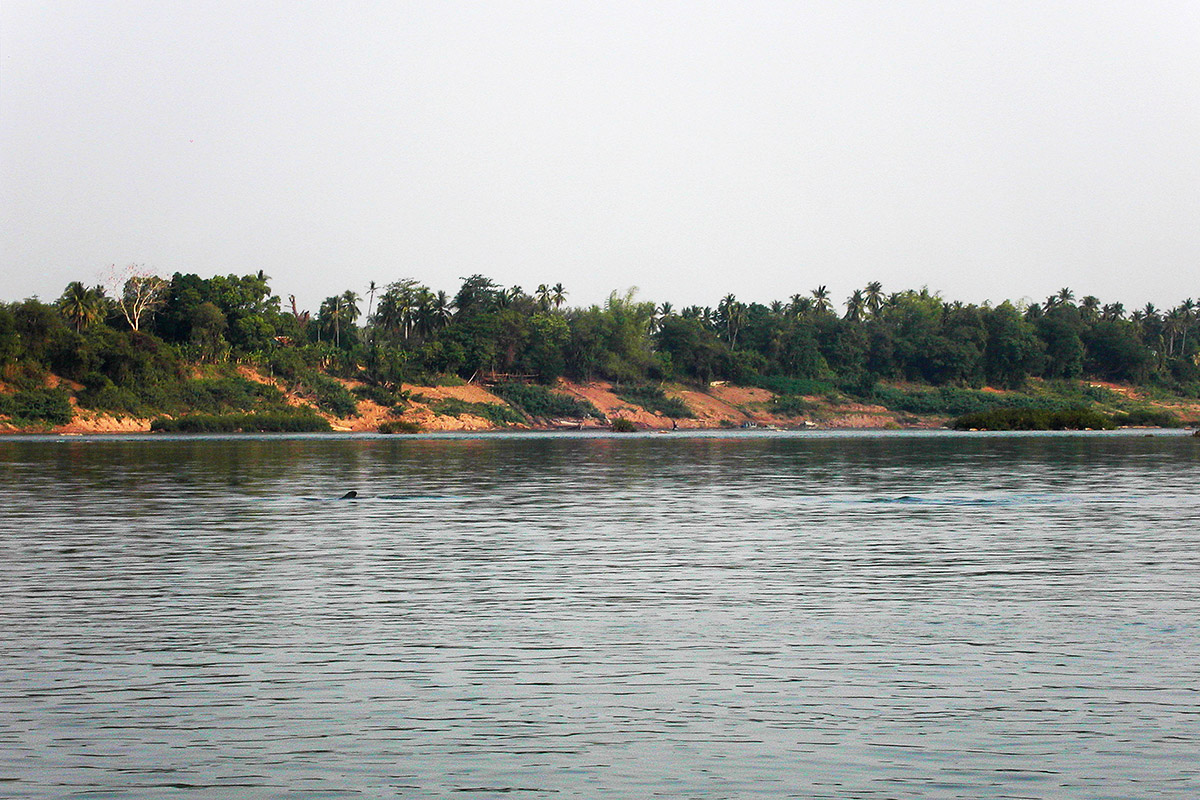 Kratie Cambodia  City new picture : cambodia/kratie irrawaddy dolphin