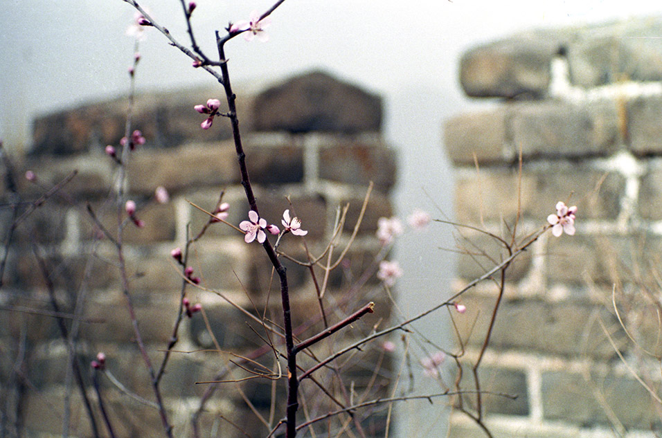 china/2001/wall_flower