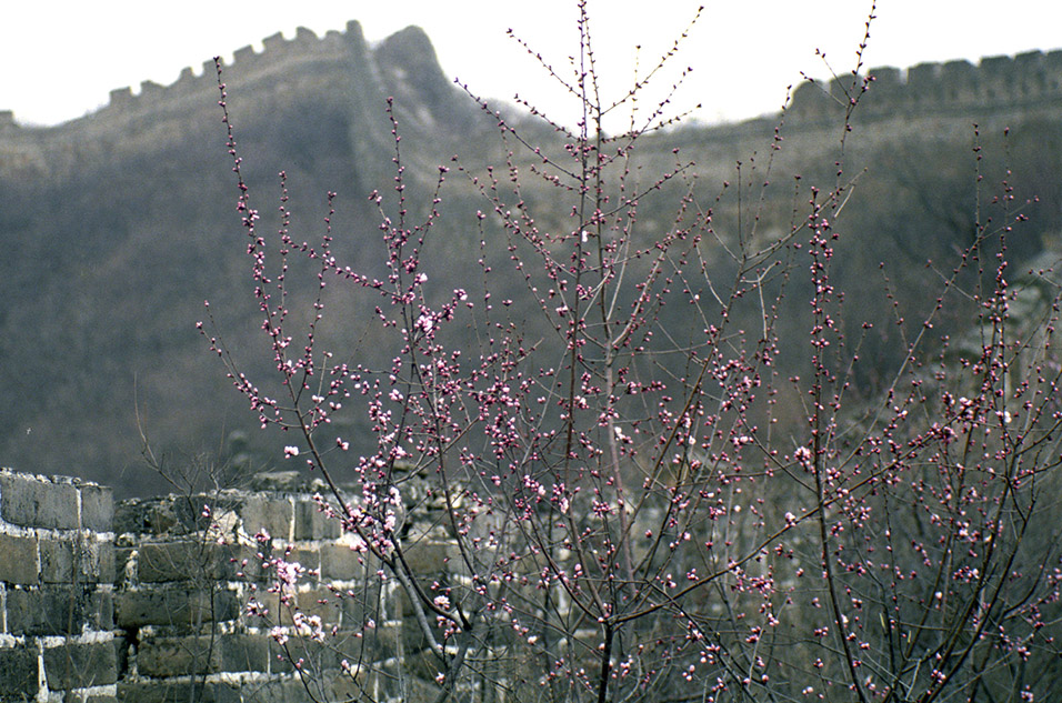 china/2001/wall_flowers_many
