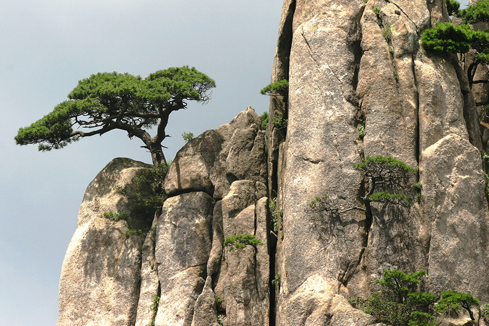 china/2006/huang_lone_tree_cliff