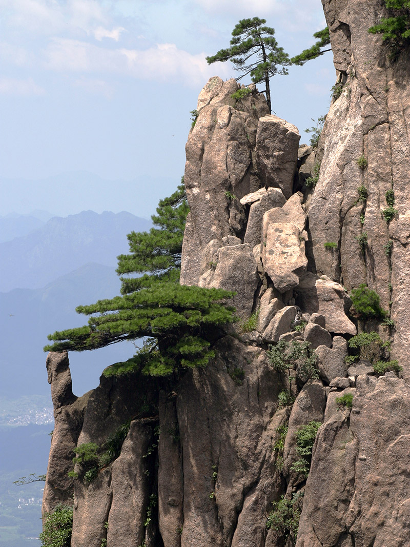 china/2006/huang_trees_cliff_vert