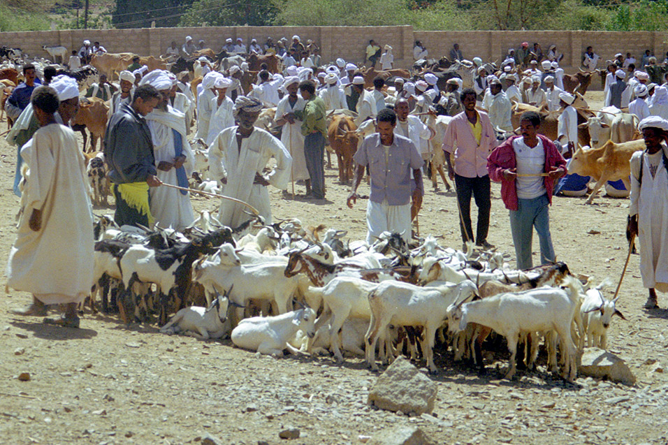 eritrea/karen_animal_market_goats_people