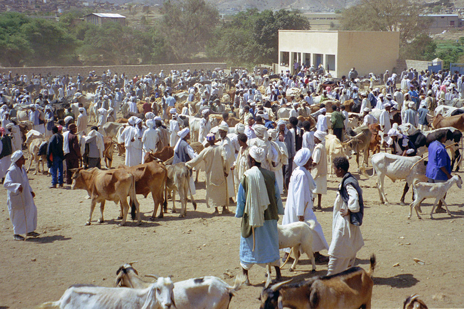 eritrea/karen_animal_market_view