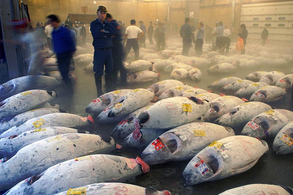 Tsukiji japan travel photos hey brian for Tsukiji fish market japan