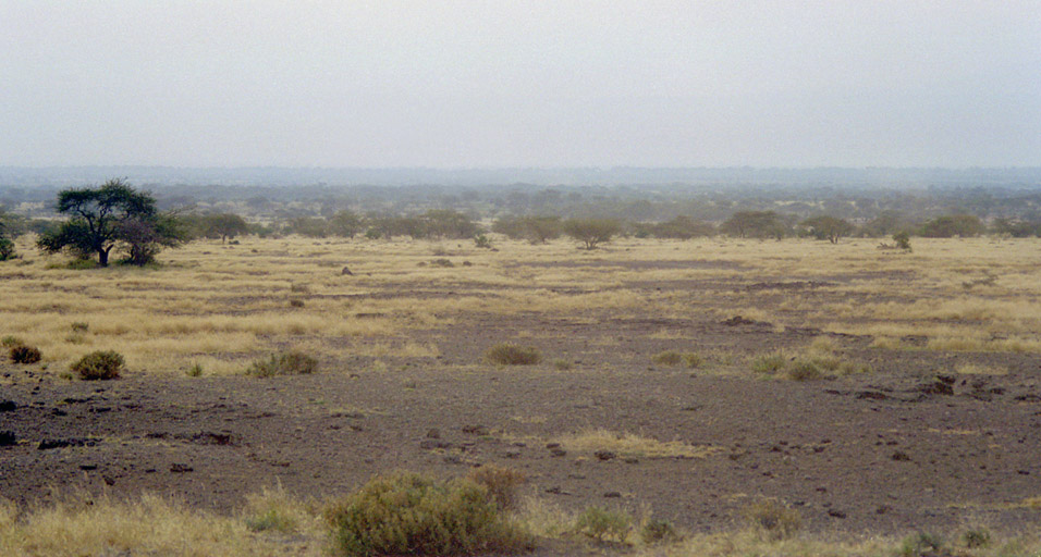 kenya/magadi_bush