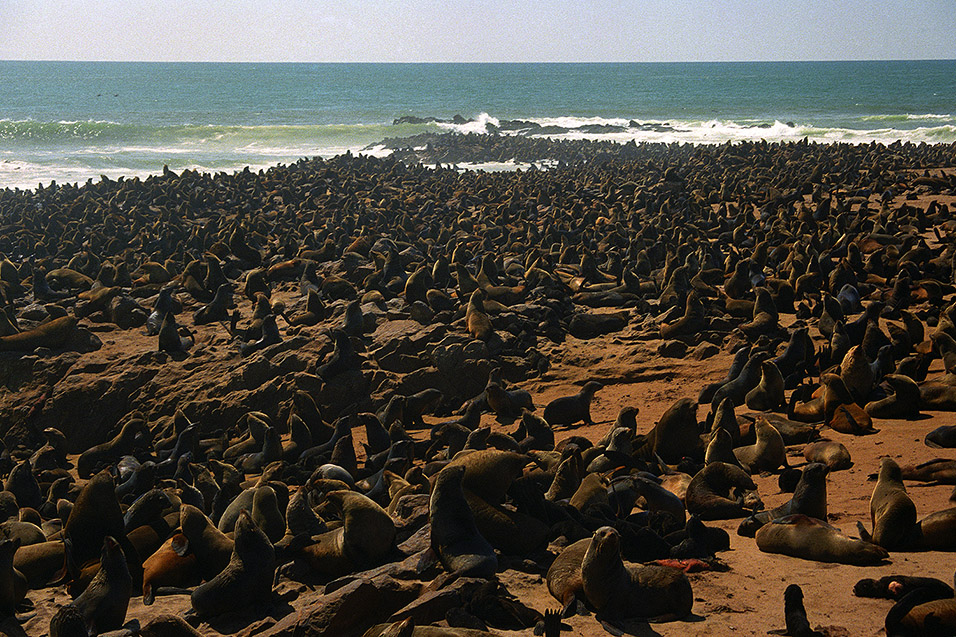 cape cross seal reserve namibia travel photos hey brian. Black Bedroom Furniture Sets. Home Design Ideas