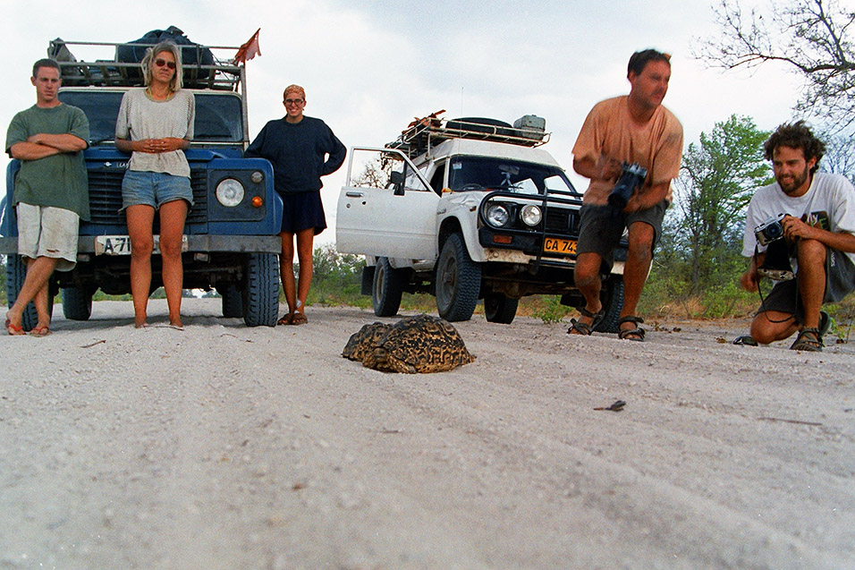 namibia/caprivi_leopard_tortoise_audience