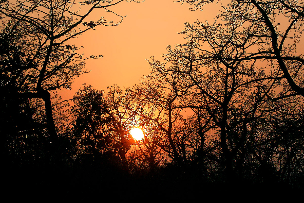 nepal/chitwan_sunset_branches