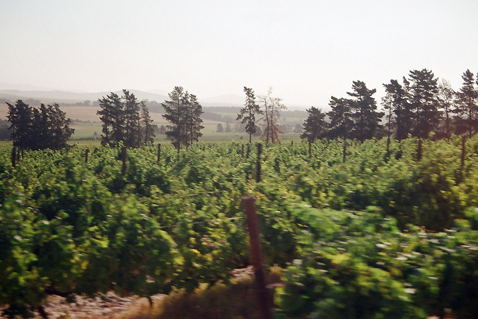 south_africa/stellenbosch_vineyards