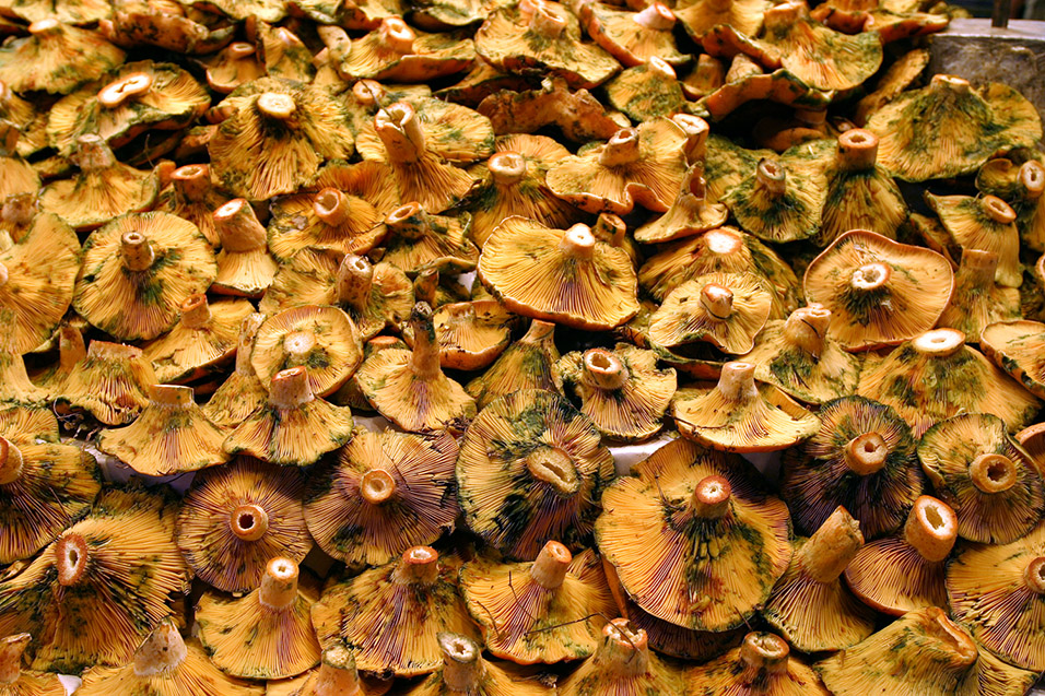 spain/barcelona_mushrooms