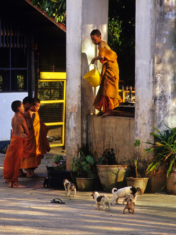 thailand/2004/nan_novice_monks_puppies