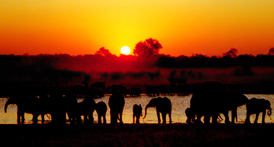 zimbabwe/hwange_elephants_sunset_new